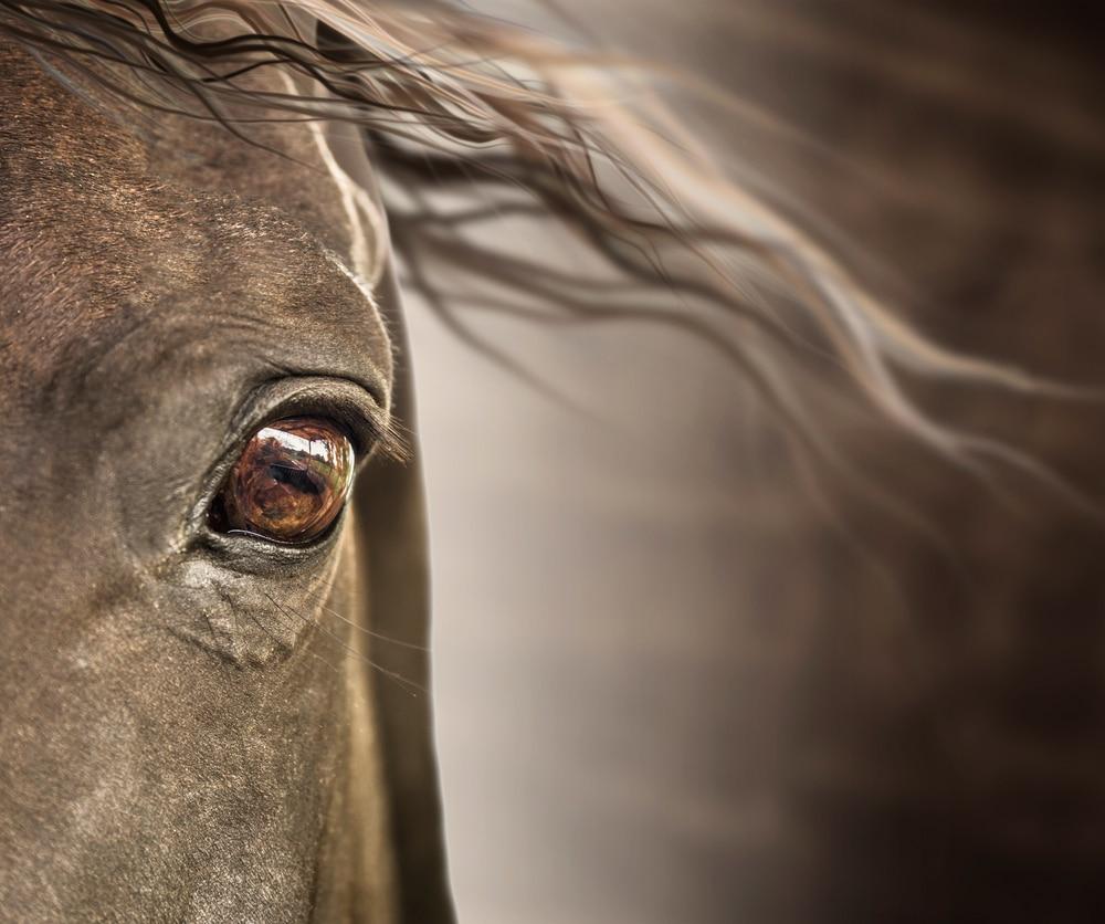 Horsefriend - Stalmatten